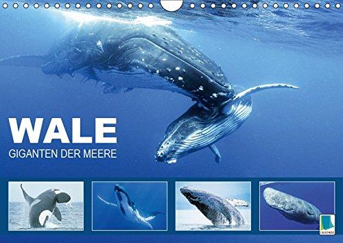 Wale: Giganten der Meere (Wandkalender 2019 DIN A4 quer): Pottwahl, Schwertwal, Buckelwal: In den Tiefen der Ozeane (Monatskalender, 14 Seiten ) (CALVENDO Tiere)