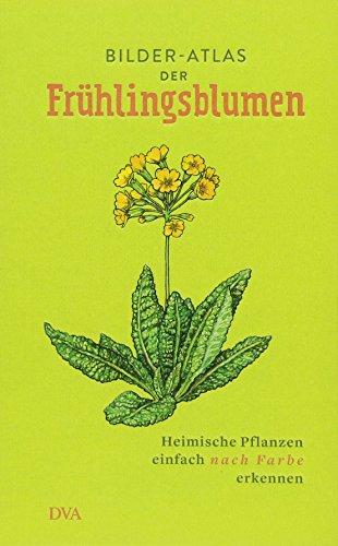 Bilder-Atlas der Frühlingsblumen: Heimische Pflanzen einfach nach Farbe erkennen