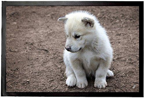 Felpudos Perros De Groenlandia Felpudo Alfombrilla (60 x 40cm)