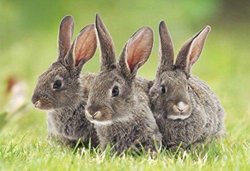 3 D Ansichtskarte Häschen Hase Kaninchen Postkarte Wackelkarte Hologrammkarte Tiere Haustiere
