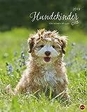 Hundekinder - Kalender 2019 - Monika Wegler - Heye-Verlag - Wandkalender - 34 cm x 44 cm