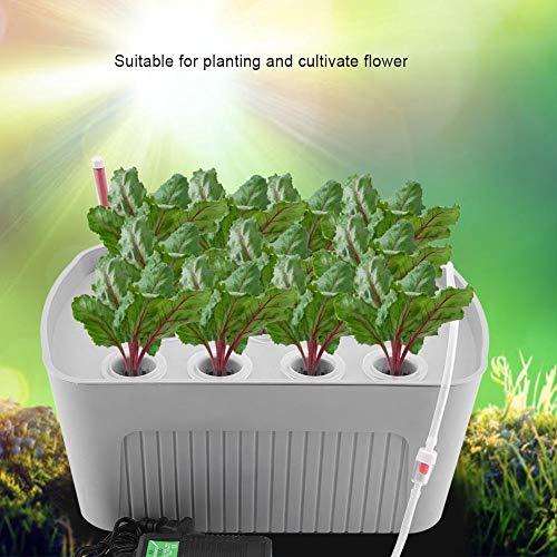 Zerodis Indoor Hydroponics Grower Kit 11 Löcher Hydroponik System Pflanze Blume Pflanzbehälter Tiefwasser Soilless Kultur Box für Home Office Küche(Grau) - 5