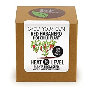 Fai Crescere Il Tuo Rosso Habanero Peperoncino Pianta Kit