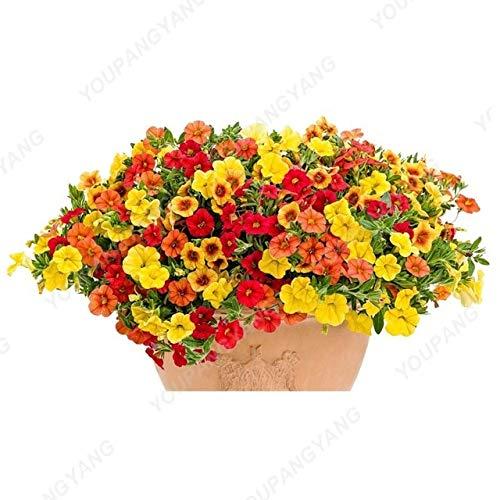 Shopmeeko Graines: grande promotion !!! 200+ plantes vivaces couleurs mélangées Pétunia intérieur Plantes fleuries pour Bonsai jardin Bonsai usine: vert Decoratio