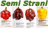 40 SEMI di PEPERONCINO TRINIDAD MORUGA SCORPION in 4 Piccantissime Varianti