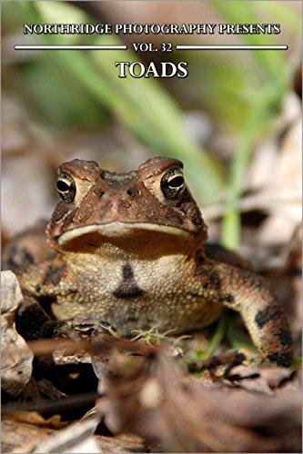 Toads (Northridge Photography Presents Book 32) (English Edition)