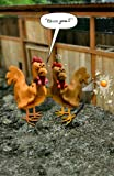 Funny Sneezing Chicken Birthday Card Humour Greeting Cards Out Of The Ark