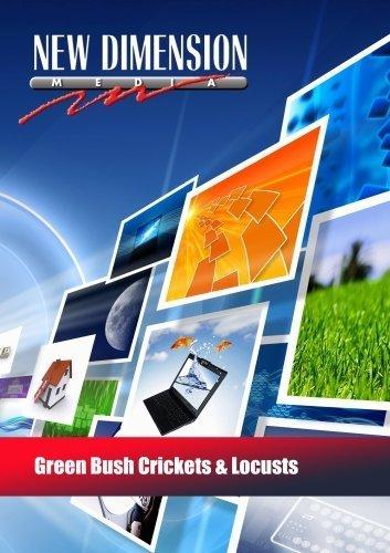 Green Bush Crickets & Locusts by New Dimension Media Cricket Green