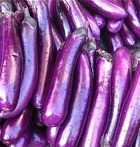 Asian heirloom heritage aubergine eggplant seeds. LONG PURPLE. Certified organic grower