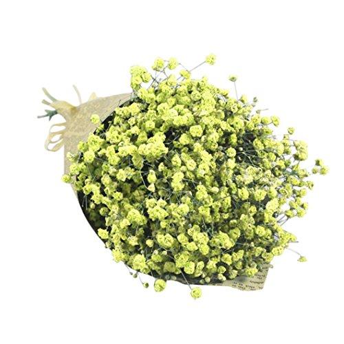 Coloré(TM) Souffle de fleurs séchées Natural Gypsophila Baby Home Fleur séchée Sky Star Star. Décor Floral le Bouquet de Fleurs Fête de Mariage (Chaud rose) (Jaune)