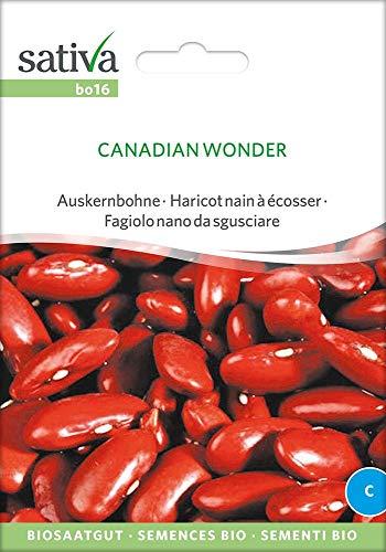 Auskernbohne Canadian Wonder | Bio-Bohnensamen