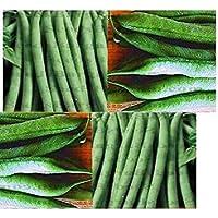 PlenTree (30) Proveedor de Bush semillas de frijol - Resistencia a la intemperie