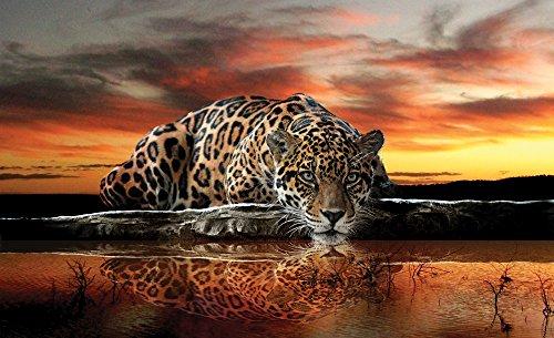 olimpia-design-fototapete-photomural-jaguar-1-stuck-126vexxxl