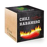 Chili Habanero im Holzwürfel