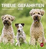 Hunde Postkartenkalender - Kalender 2018