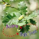 Life Cycles: Acorn to Oak Tree