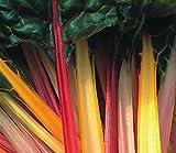 SeeKay Swiss Chard - Rainbow Appx 450 seeds - Beet Leaf