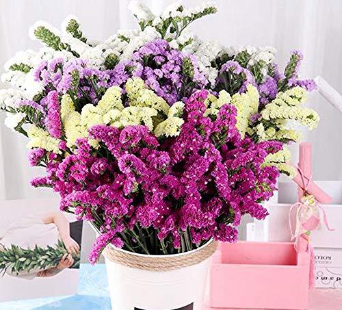 Tooget - mazzo di fiori secchi naturali, nontiscordardimi, miosotis sylvatica, bouquet di fiori secchi appena raccolti per decorare la casa, feste, matrimoni, negozi (mixed color)