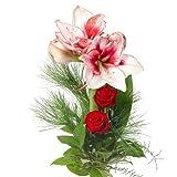 Blumenversand - Blumenstrauß - zu Weihnachten - Blumen zum Advent - mit rot-weißer Amaryllis und roten Rosen - mit Gratis - Grußkarte Deutschlandweit versenden