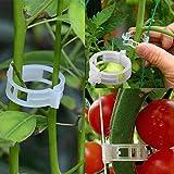 Ruimin Anlage Unterstützung Clips für Vine Gemüse Tomate zu wachsen aufrecht und macht Pflanzen Gesünder