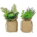 Coltivare piante grasse rampicanti le piante grasse for Piante rampicanti finte