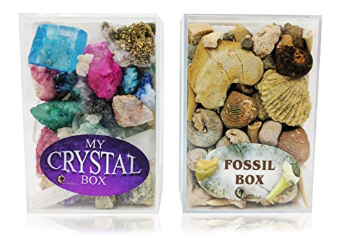 fossil-crystal-box-set