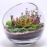Ecosides - Jarrón de cristal transparente inclinado para terrario, diseño de globo redondo de cristal de corte ancho, para po