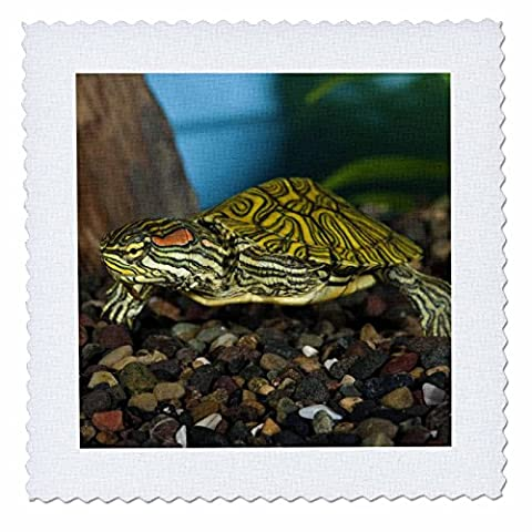 3dRose qs_84061_5 Ornate Red Ear Slider Turtle-Na02 Dno0772-David Northcott-Quilt Square, 14 by