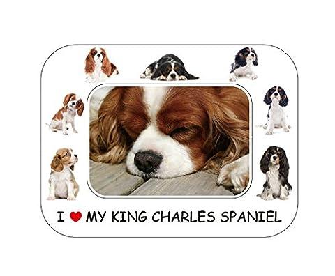Chien, Cavalier King Charles - Magnifique cadeau 20 x 15 cm-Cadre Photo magnétique-Aimant de réfrigérateur
