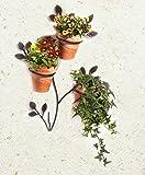 Wenko 5857050500 parete portavaso Ranke per 3 piante in vaso, ferro, metallo 56 x 1,3 x 43 cm, marrone