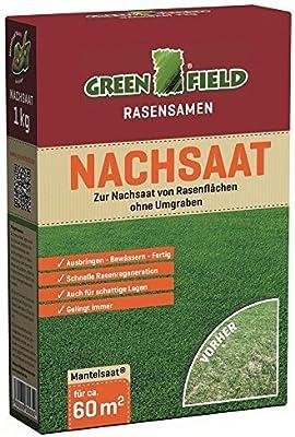 Greenfield 62511 Nachsaat Semillas de césped semillas de césped 1 kg para aprox. 60 qm