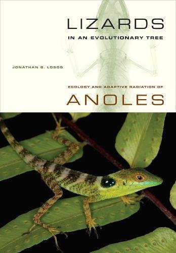 Lizards in an Evolutionary Tree: Ecology and Adaptive Radiation of Anoles (Organisms and Environments, Band 10)