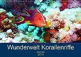 Wunderwelt Korallenriffe (Wandkalender 2019 DIN A3 quer): Farbenpracht und Artenvielfalt unter Wasser (Monatskalender, 14 Seiten ) (CALVENDO Hobbys)