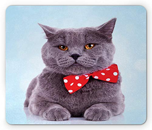SHAQ Cat Mouse Pad Mauspad, Tuxedo Gray Scottish Fold Theme with Vermilion White Polka Dots Tie Bow Baby Blue Fun, Standard Size Rectangle Non-Slip Rubber Mousepad, Multicolor