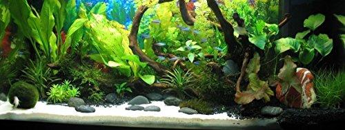TM Aquatix Aquarium Sand White Fish Tank Substrate Natural Silica 0,5-0,8mm / 5kg 5