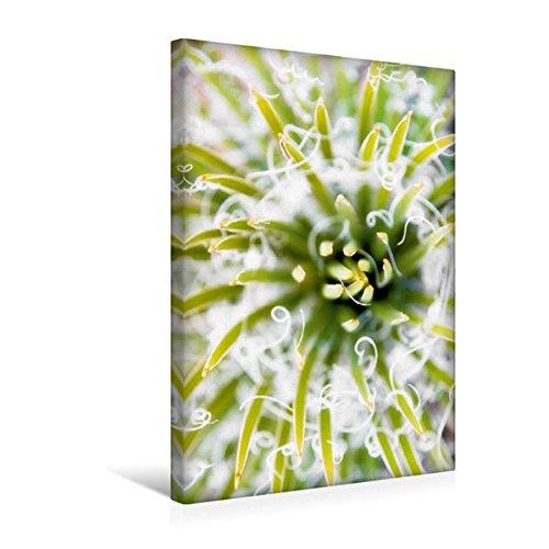 Calvendo Premium Textil-Leinwand 30 cm x 45 cm hoch, Stachelig aber wunderschön - Nahaufnahme Eines Kaktus | Wandbild, Bild auf Keilrahmen, Fertigbild auf Echter Leinwand, Leinwanddruck Natur Natur