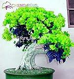Shopmeeko 50 stücke Mix Farbe Bougainvillea Balkon Topf Yard Bonsai Blume Pflanze Immensly Blumig Blumige Winterharte Kostenloser Versand Sementes: Burgund