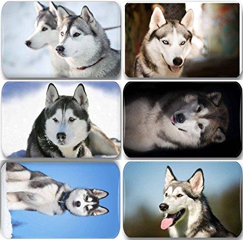 Merchandise for Fans Siberian Husky/Alaskan Malamute/Schlittenhund - 6 rechteckige Kühlschrankmagnete 7X 4,5 cm - 02 für Memoboard Pinnwand Magnettafel Whiteboard