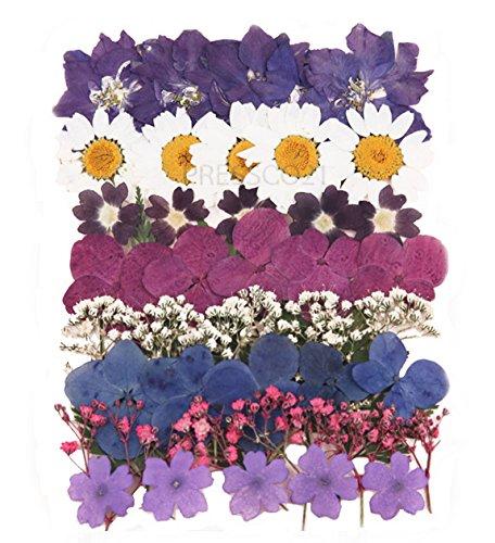 Gepresste Blumen gemischt Pack , Akelei , Narzissen , Rittersporn , der Königin-Anns Spitze, Rosenblätter , Laub