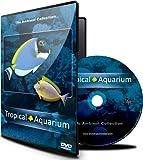 Aquariums Musique - Best Reviews Guide