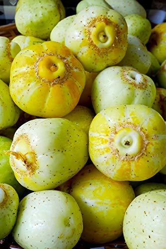 Shoopy Star Graines de concombre Miracle géant long Rare Burpless végétale Ukraine organique