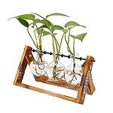 AOLVO Hydrokultur Growing Kit, Avolo klein Lear Glas Vase mit Holz Ständer für Blumen, Gemüse, grün Pflanzen Innen Desktop Dekoration. (3Tiny Terrarien ausgewählt werden können) 3 Pcs Glass Vase