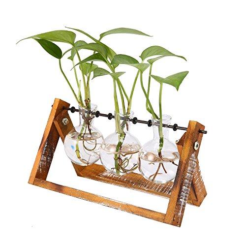 AOLVO Hydrokultur Growing Kit, Avolo klein Lear Glas Vase mit Holz Ständer für Blumen, Gemüse, grün Pflanzen Innen Desktop Dekoration. (3Tiny Terrarien ausgewählt werden können) 3 Pcs Glass Vase (Pflanzen Können)
