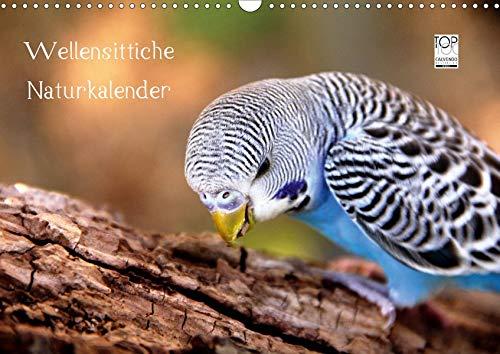 Wellensittiche - Naturkalender (Wandkalender 2020 DIN A3 quer): Auch dieser Kalender des renommierten Naturfotografen Björn Bergmann birgt ... (Monatskalender, 14 Seiten ) (CALVENDO Tiere)