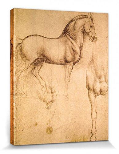 1art1 87394 Leonardo Da Vinci – Pferdestudie, 1493-1494 Poster Leinwandbild Auf Keilrahmen 50 x 40 cm