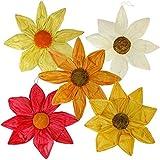 6 x Papierblüten aus Krepp zum Hängen Ø 50 cm