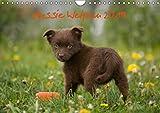 Aussie Welpen 2019 (Wandkalender 2019 DIN A4 quer): Australian Shepherd Welpen (Monatskalender, 14 Seiten ) (CALVENDO Tiere)