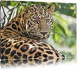 aufmerksamer Leopard im Schatten auf Leinwand, XXL riesige Bilder fertig gerahmt mit Keilrahmen, Kunstdruck auf Wandbild mit Rahmen, günstiger als Gemälde oder Ölbild, kein Poster oder Plakat