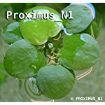 Proximus N1 Amazon Frogbit 10 X Mini Live Plants 7
