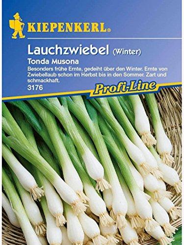 Produkt-Bild: Zwiebeln Winterlauchzwiebeln Tonda Musona